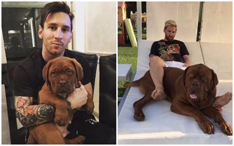 Vinyl Home Decor by Proud Dog Dad And Soccer Star Lionel Messi Can T Believe