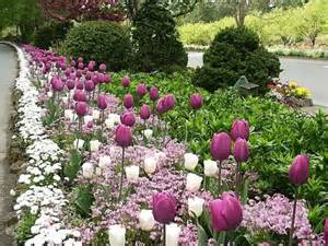 planting spring bulbs how to plant and grow bulb type