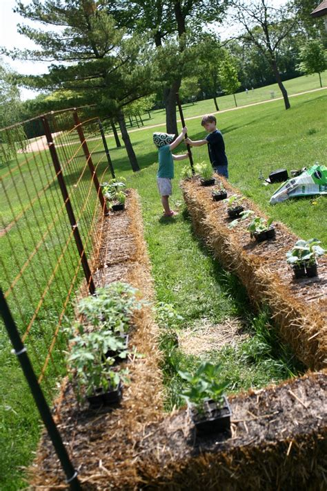 Hay Bale Garden by 4 The Of Family How To Plant A Straw Bale Garden