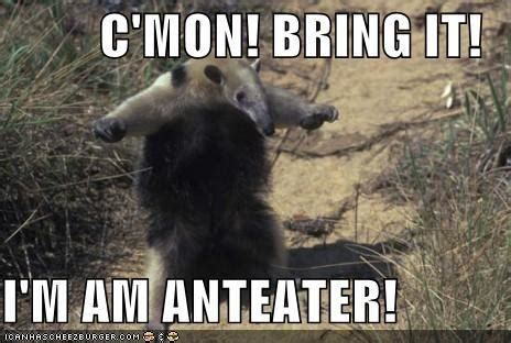 Anteater Meme - hairy crazy ants invade from texas to miss