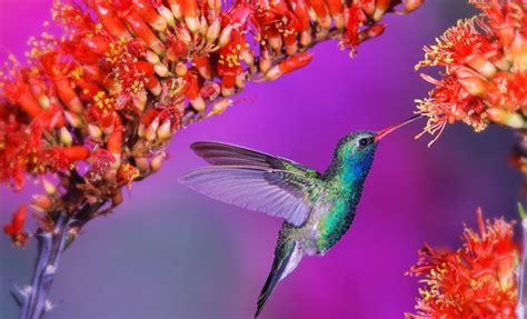 Casing Hp Personal Design Flower And Birds beautiful birds wallpapers hd beautiful desktop wallpapers 2014