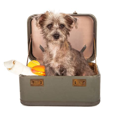 airlines that allow dogs 8 most friendly airlines and their policy examined