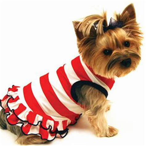 puppies dressed up how to dress up your plus pets dogs cats puppies and polyvore