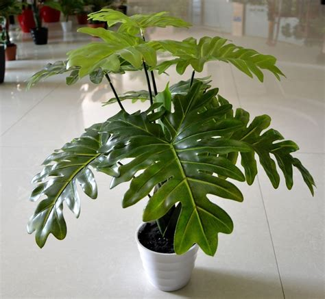 buy large house plants online buy large house plants 28 images corn plant indoor plant pots and low lights on