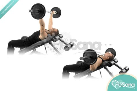 ncline bench press incline bench press exrx images