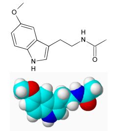 alimenti contengono melanina la melatonina fa dimagrire o ingrassare dietando
