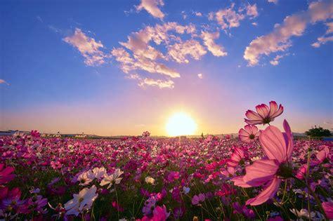 imagenes de paisajes florales banco de im 193 genes hermoso co con flores al amanecer