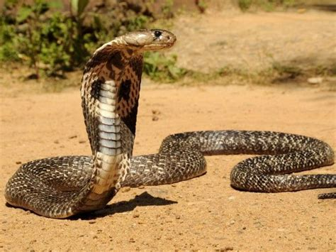 imagenes de animales del desierto que animales viven en el desierto