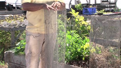 How To Keep Raccoons Out Of Your Garden by How To Keep Raccoons Out Of Vegetable Gardens Vegetable