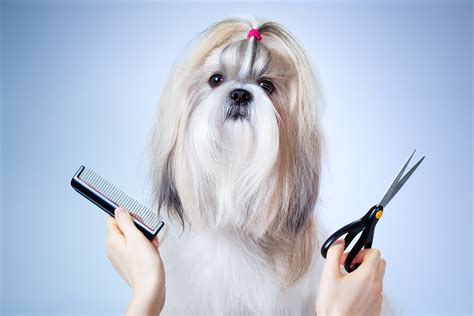do you tip a groomer grooming tip category animal behavior college