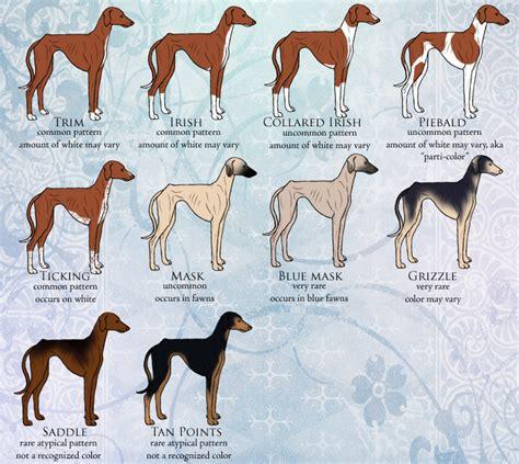 italian greyhound colors azawakh colors 2 markings patterns akc fss breeds