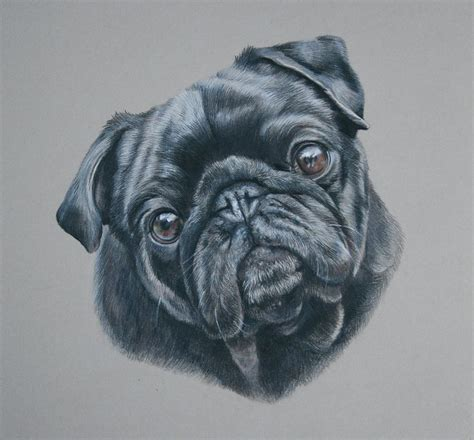 ty pug ty pug portrait by greaves on deviantart