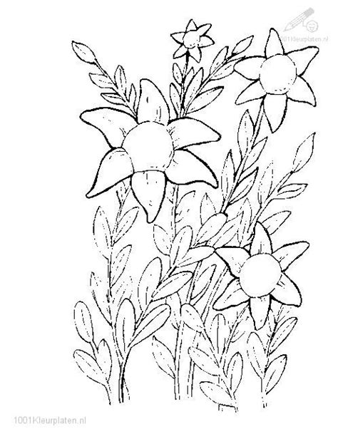 coloring pages of flowers and plants free coloring pages of flowers and plants