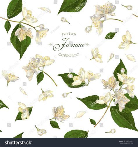 pattern for butterfly jasmine paper flower vector seamless pattern jasmine flowers on stock vector
