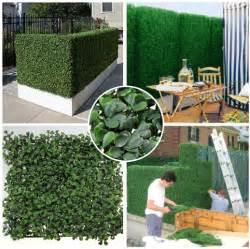 Plastic Trellis Fencing Plants For Privacy On Pinterest Boxwood Hedge Fencing