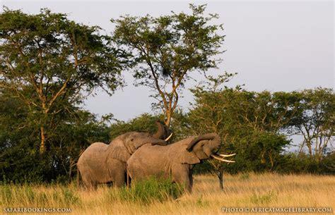 queen elizabeth national park uganda wildlife uganda safari 8 day best of uganda tour
