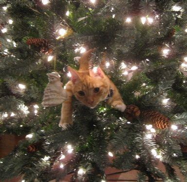 cat in christmas tree pictify your social art network