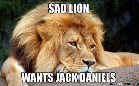 Lion Meme - confession lion meme