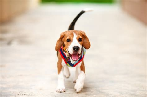 a wagging means the is happy wagging behavior revealed nation