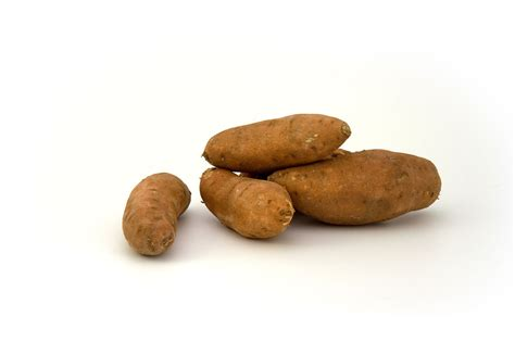 file sweet potato brazil2 jpg wikimedia commons file sweetpotato jpg wikimedia commons
