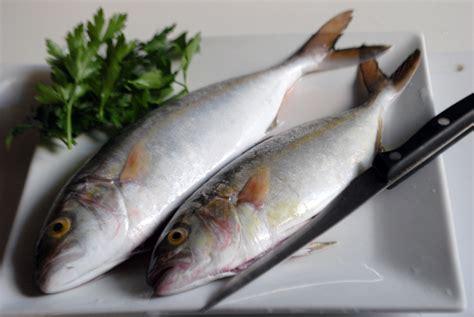 pesce serra cucina pesce serra al forno e con gli scarti sud italia