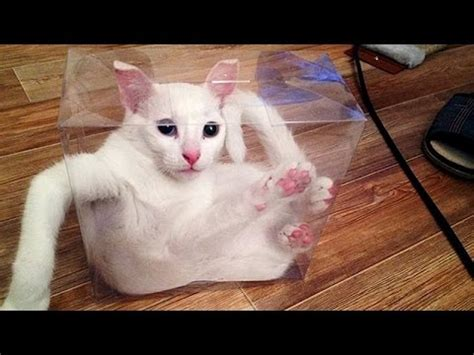 8 Ways To A Laugh At Your Cats Expense this and you will die laughing animal