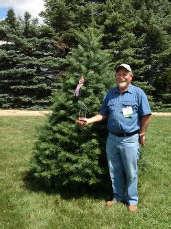 christmas tree farms in southeast michigan southeast michigan includes detroit tree farms choose and cut trees tree