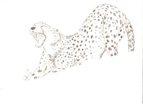 sketchbook cheetah cheetah sketch 9 by shalaschaska on deviantart