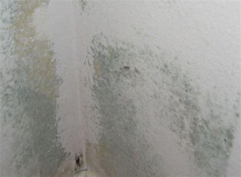 schimmelbefall im schlafzimmer ursachen f 252 r schimmelpilzwachtum schimmelpilz info
