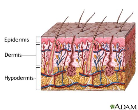 6 Facts About Skinbook The New by Skin Integumentary System Information