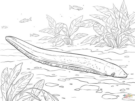 moray eel coloring coloring pages
