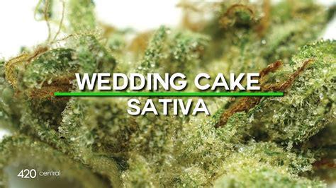 Wedding Cake Gelato by Wedding Cake X Gelato 33 Strain Wedding O