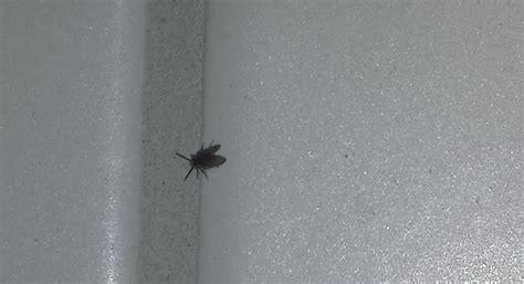 kleine fliegen in der wohnung was tun 220 berall kleine fliegen oder k 228 fer k 252 che insekten kaefer