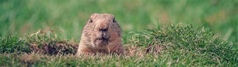 groundhog day up groundhog day takeaway get that heating system tuned up