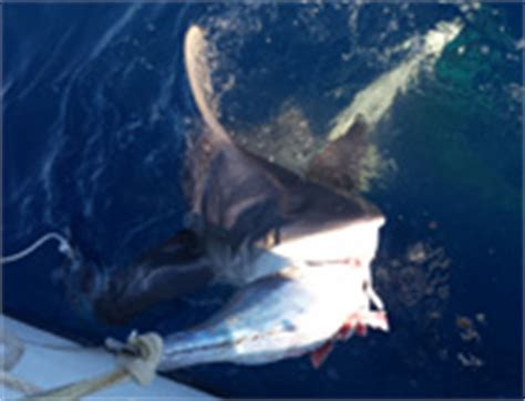 party boat fishing jupiter fl good time deep sea charter fishing boat jupiter florida