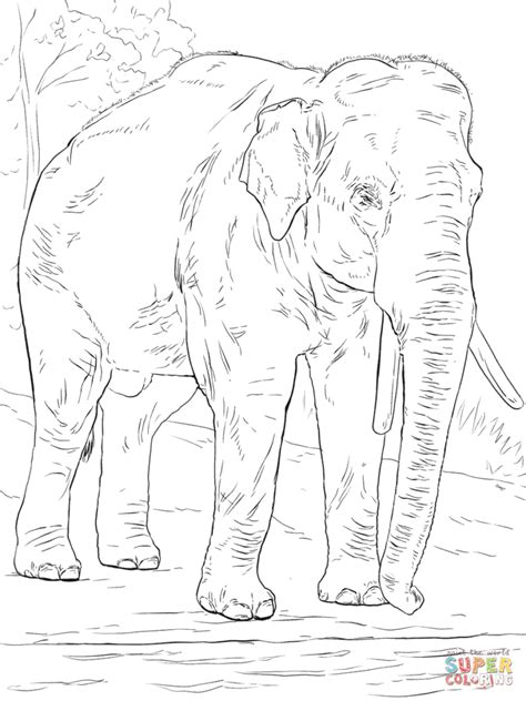 asian elephant coloring page asiatic elephant coloring page free printable coloring