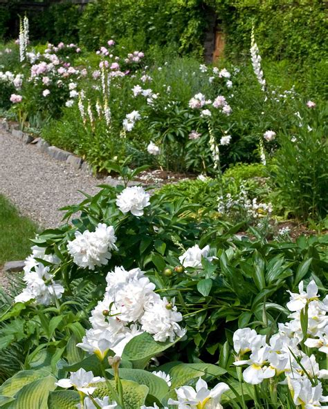 White Flowers Garden Hortensias Figues And Jardins On
