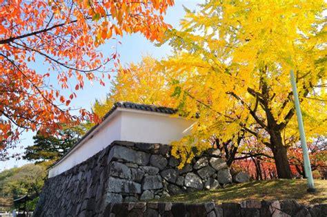 autumn  japan    enjoy  fall foliage
