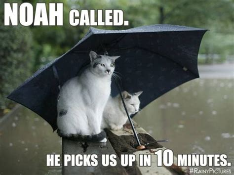 Rainy Day Meme - noah called he picks us up in 10 minutes weather