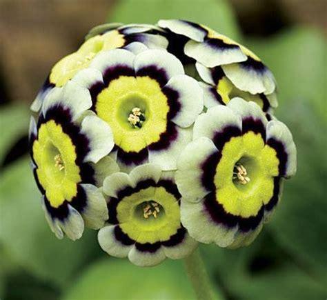 imagenes raras pero bellas las flores mas raras y hermosas taringa