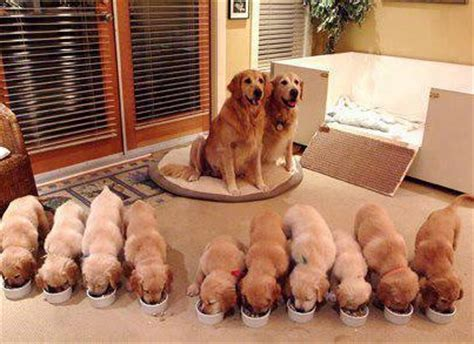 best family dogs large a big happy family rofl lol lmao