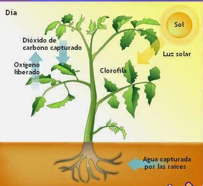éc vs thåy iãn arte y jardiner 205 a la ciencia de la sombra en dise 209 o de