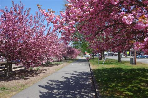 9 cherry tree groveland ma 10 best things to do in provincetown images on provincetown massachusetts
