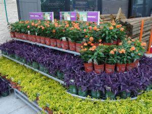 garden centres  plant nurseries  bangkok