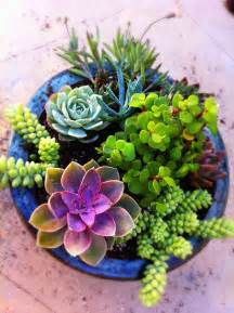 succulent gardens in pots images