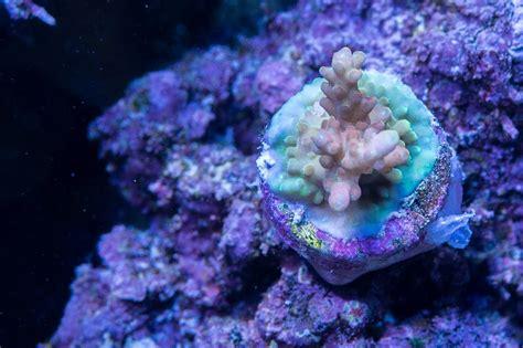 Dd Reef Paste 270 Gr jbny s 270g tank thread page 11 manhattan reefs