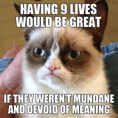 Best Of Grumpy Cat Meme - the best of tard the cat images
