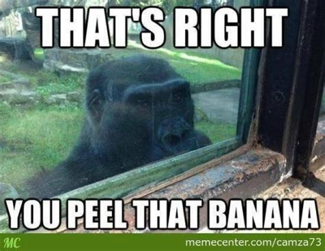 Perverted Memes - thats right animal meme jokes memes pictures