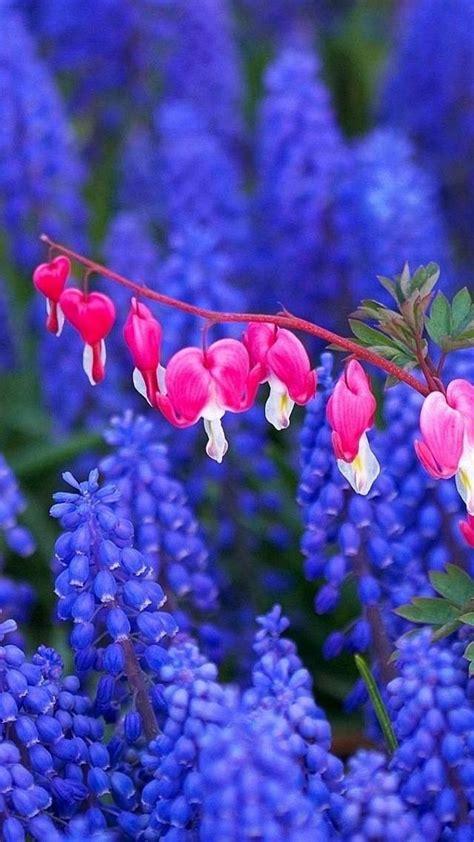 fiori sfondo sfondi hd fiori 70 immagini