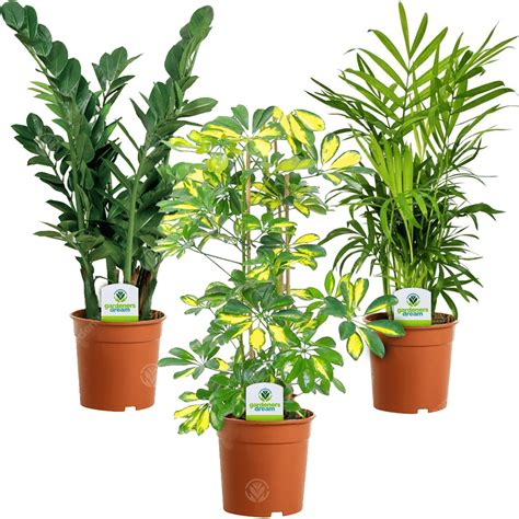 indoor plant mix  plants house office  potted
